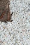 Gravier Quartz blanc 10-14 mm (1)